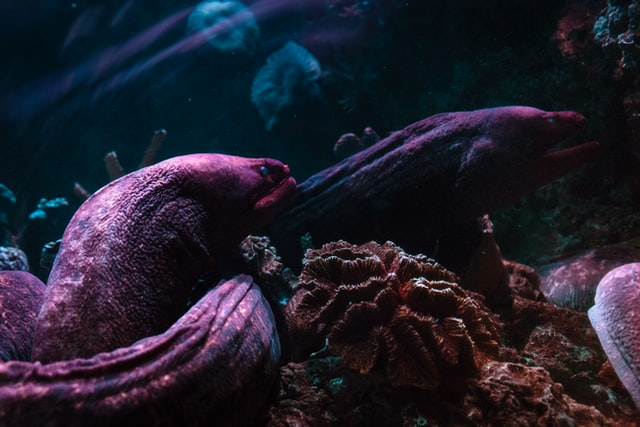 Electrical eel